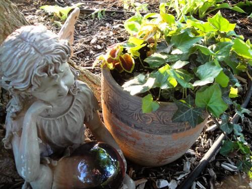 coleus and ivy